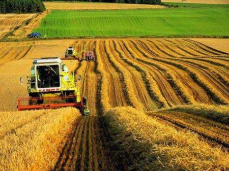 На фото: Фермерское хозяйство